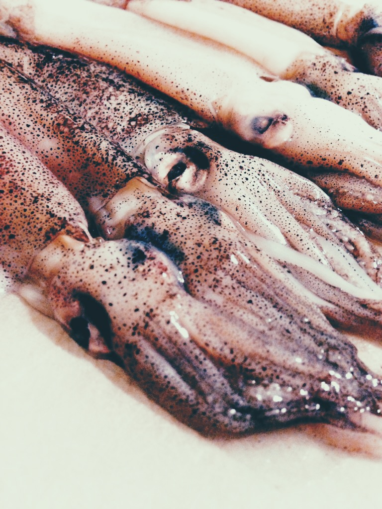 squid prep